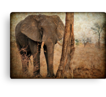 ALL IN AUTUM - WHEN IS SPRING? - THE AFRICAN ELEPHANT -Loxodonta Africana Canvas Print