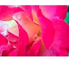 Love Rose and Raindrops Photographic Print