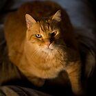 Orange Tabby by tahigens