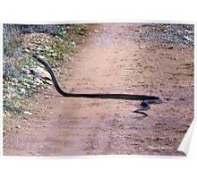 THE BLACK MAMBA, ONE OF THE DEADLIEST SNAKES IN THE WORLD! - Dendroaspis polylepis Poster