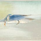 ballet of the Least Tern by Jacque Gates
