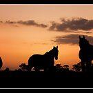 ~ Three Steeds ~ by Bronwyn Munro