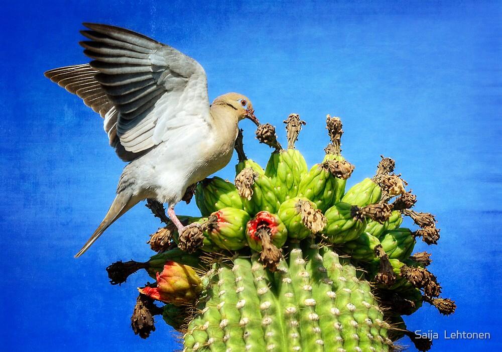 White Winged Dove  by Saija  Lehtonen