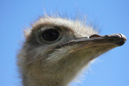 Ostrich by knelliec