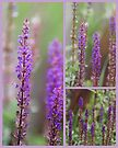 """Purple Rain"" by KBritt"