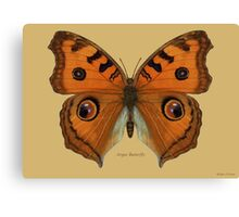 Argus Butterfly Canvas Print