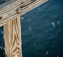 Spider Web by NewLayer