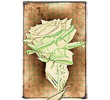 Loretto Rose Photographic Print