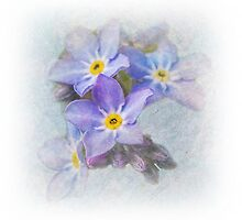 Forget-Me-Not by Jackie Burrell