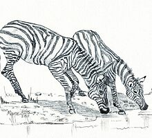 The puzzle about the Zebra's stripes by Maree Clarkson