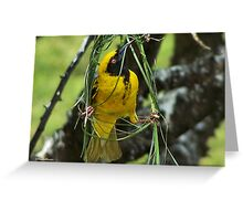 NOW YOU SEE, THIS IS HOW IT'S DONE! - (SOUTHERN) MASKED WEAVER –  SWARTKEEL GEELVINK - Ploceus velatus Greeting Card