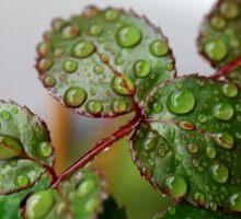 Raindrops Sticker