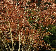 Autumn Colours by Noel Elliot