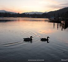 Lake Windermere sunset with mallards by toucanjester