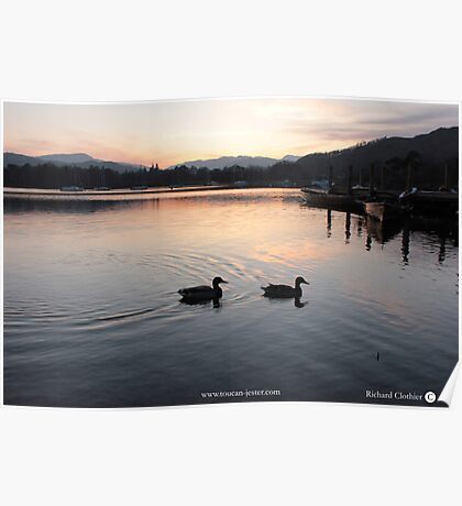 Lake Windermere sunset with mallards Poster