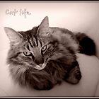 Cat life by Olga
