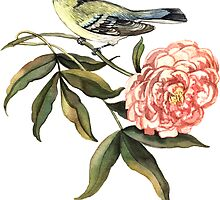 Watercolor bird and flower peony by Anna  Yudina