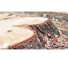 The lumberjack Photographic Print