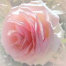 Pink rose in square by bubblehex08