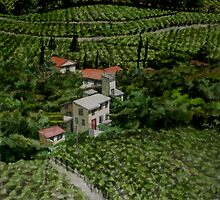 Vineyards at the Chateauneuf du Pape, Provence, France by Freda Surgenor