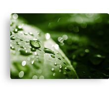 leaf after the rain Canvas Print