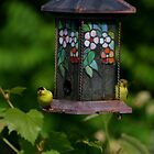 American Gold Finch Pair by Paula Tohline  Calhoun