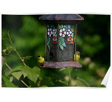 American Gold Finch Pair Poster
