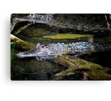 Scary Alligator Canvas Print