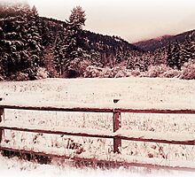 Fence of the Huckleberry Range  by tsarts