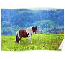 Stallion on the Hillside  Poster