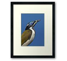 THE BANANA BIRD Framed Print