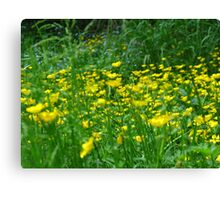 Meadow fun Canvas Print
