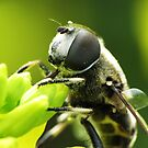 Bee Mimic 1  by photonista