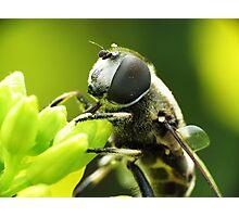 Bee Mimic 1  Photographic Print