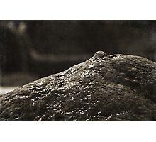 Everything Zen Photographic Print