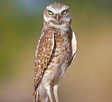 The Stare Down by Sue  Cullumber