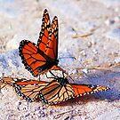 monarch love by ezdrifter