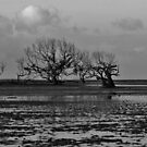 Low tide in the mangroves by Sue Downey