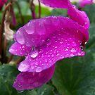 Drips of rain by Matthew Sims