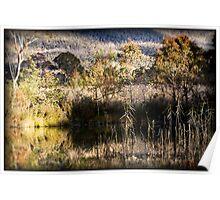 Tidbinbilla Nature Reserve - The Sanctuary Poster