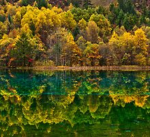 Autumn in Jiuzhaigou by Daniel  Chui