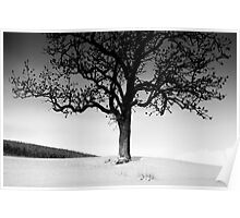 Snow and Tree, Southern Upland Way, Yair, Scottish Borders Poster