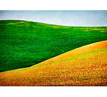 Green and Gold Photographic Print