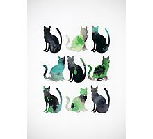 Nine Cats Photographic Print