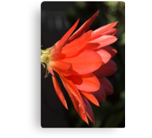 Red Zygo Flower in Profile Canvas Print