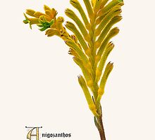 Botanic Print Flower Series by DavidCG