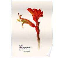 Botanic Print Flower Series Poster