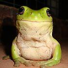 Urban Green Tree Frog by Austin Stevens