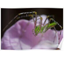 Green spider-Pink rose Poster