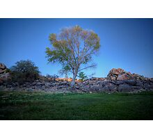 Rock Wall Tree Re...What The? Photographic Print